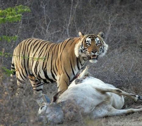 Jharana jungle lodge / Image 5