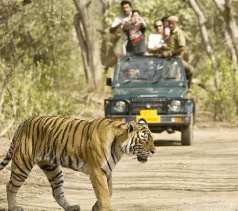 Jharana jungle lodge / Image 2