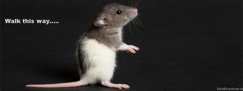Mouse Specifics, INC / Image 1