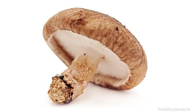 Fresh Mushrooms / Image 7