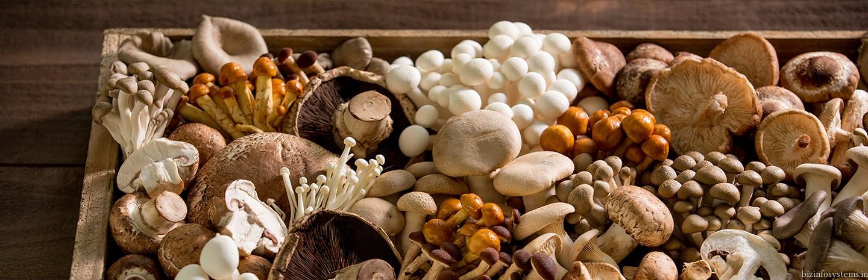 Fresh Mushrooms / Image 3